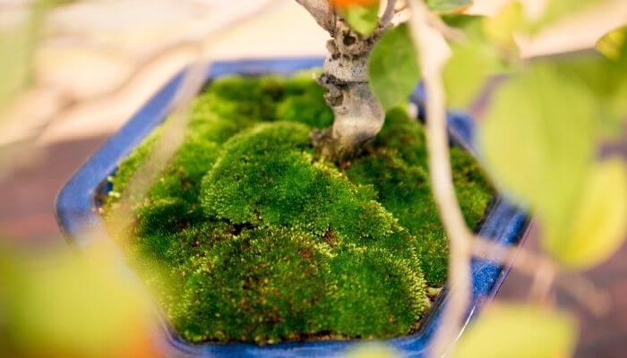 Art Of-Plants