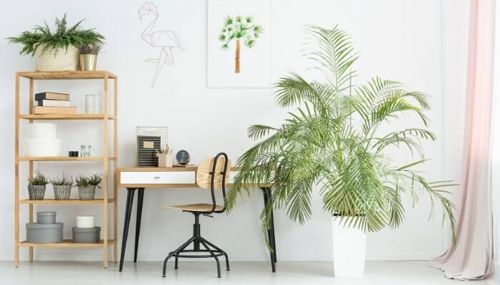 Art-Of Plants