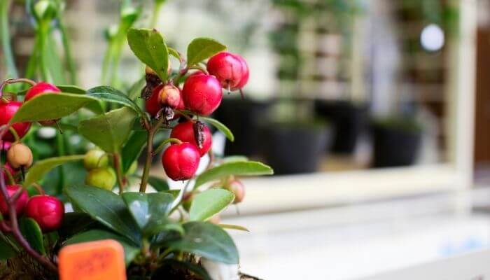 HOW TO PLANT FRUIT TREES IN A POT