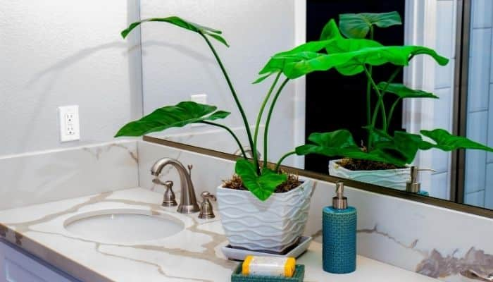 plants on bathroom